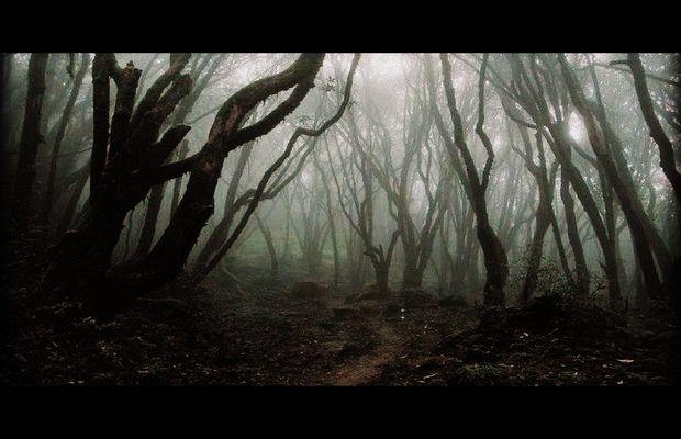 solution Darkest Woods b